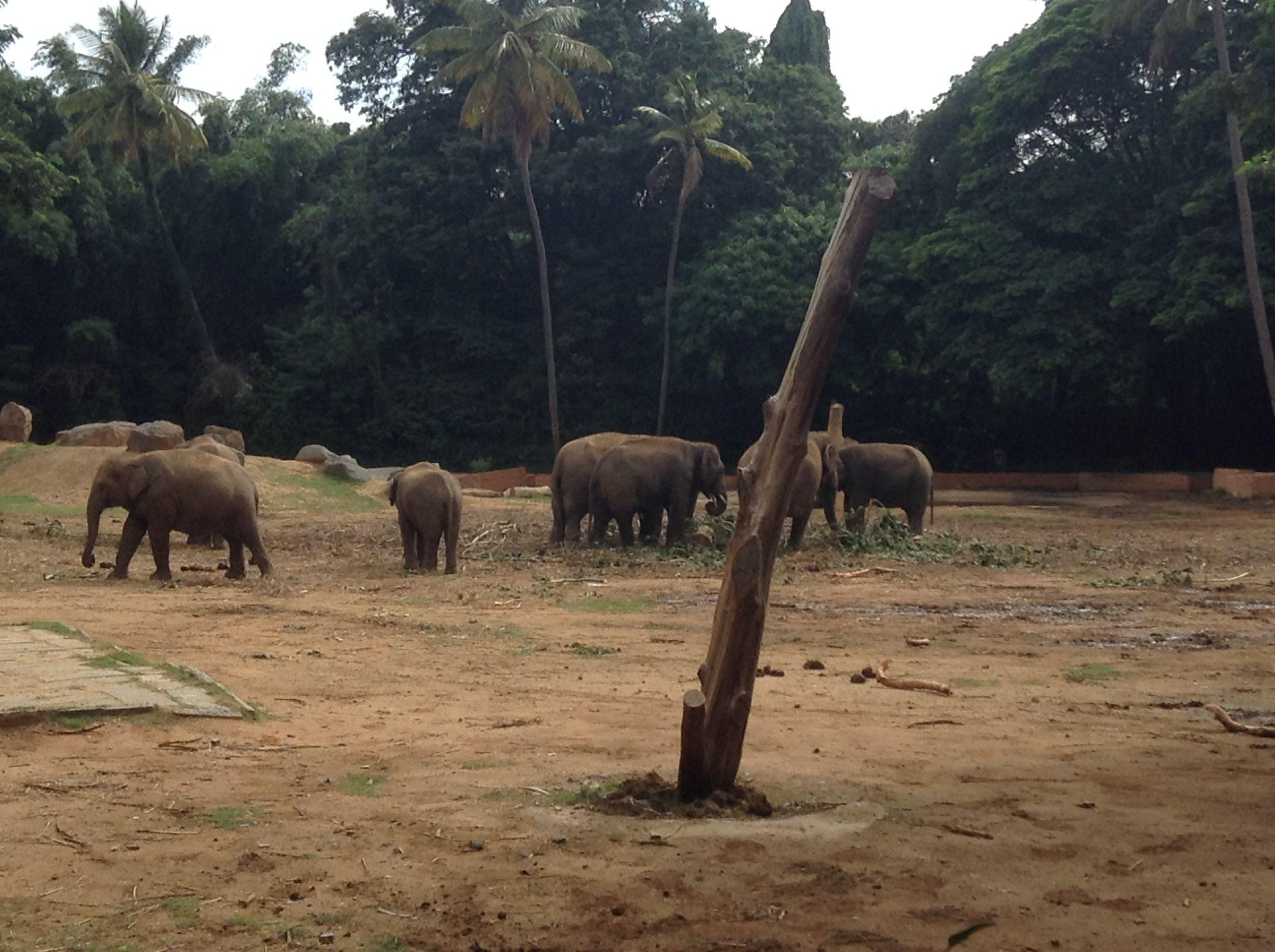 2d6795a75c2bbd52524a2c46421dcf1b - Mysore Zoo Sri Chamarajendra Zoological Gardens