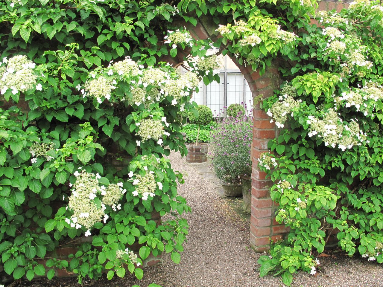 ROCK ROSE: BACK TO ENGAND AND MORE GARDENS