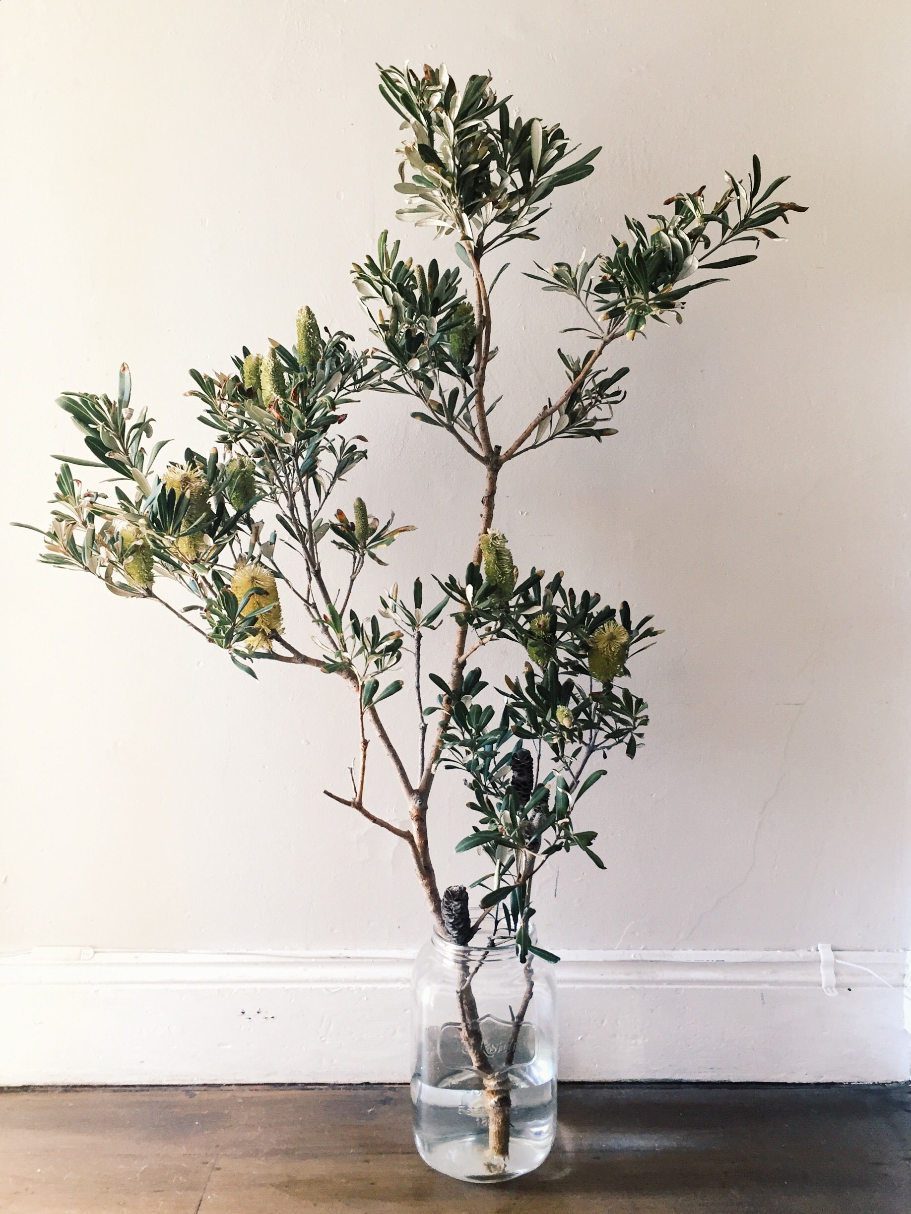 Australian Native Coast Banksia Branch In Vase Australian Native Flowers Australian Flowers Vase With Branches