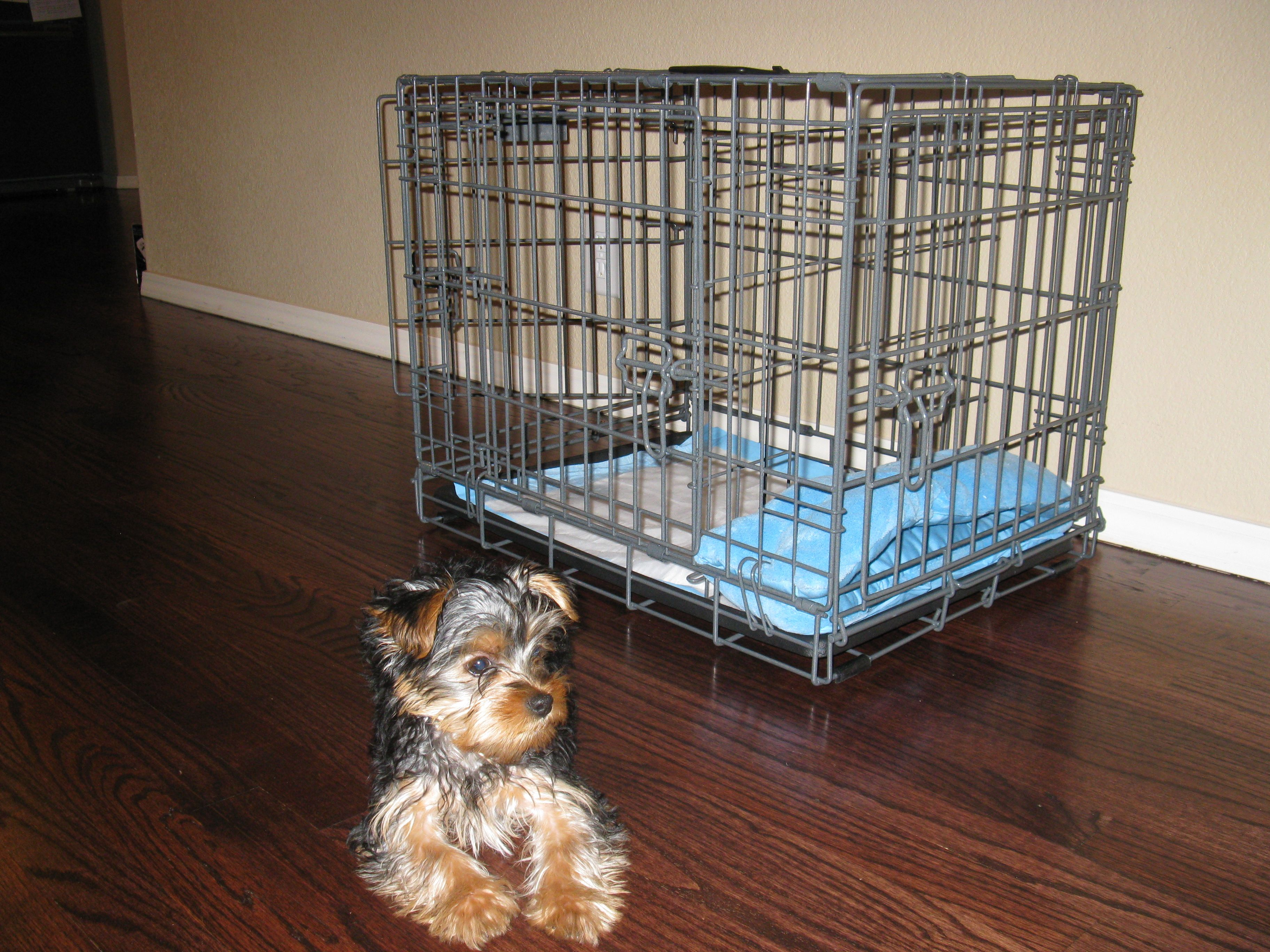 Share this Pin with anyone needing to potty train a puppy ...