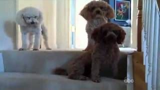 Which is the Guilty Dog, via YouTube.