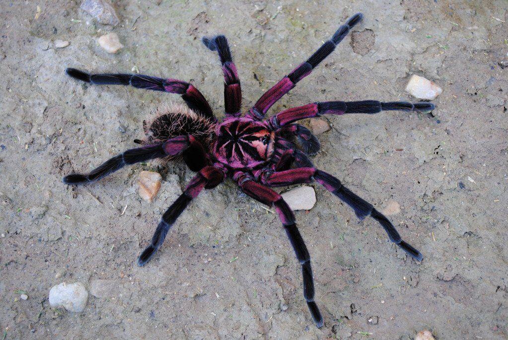 Fantastic Insect おしゃれまとめの人気アイデア Pinterest Ef None 画像あり