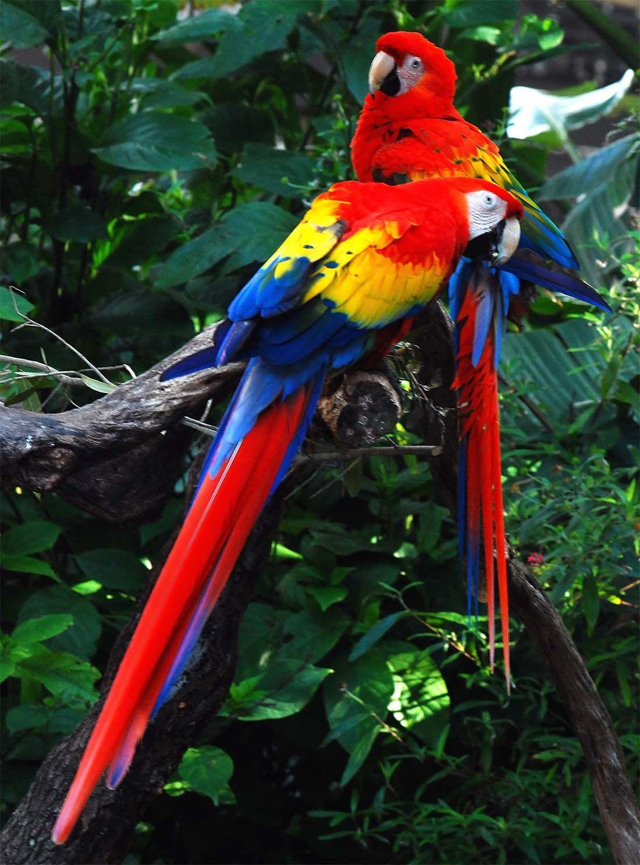 Amazon rainforest | The Amazon rainforest has a great ...