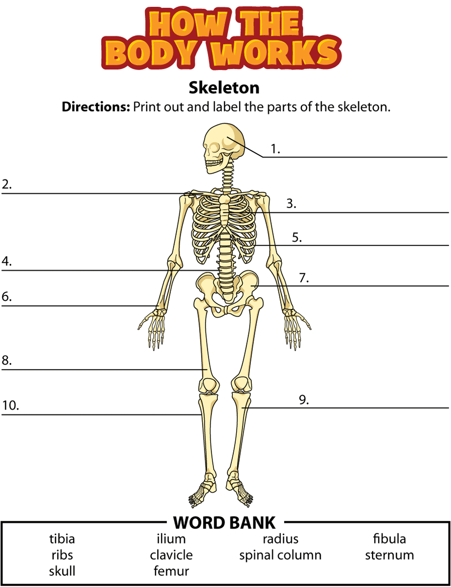 Skeleton Labeling Page | Abeka Health Grade 3/4 RCC | Pinterest