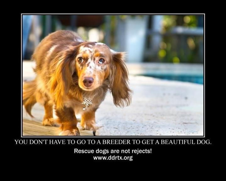 Rescue Dogs Are Not Rejects Beautiful Dogs Dogs