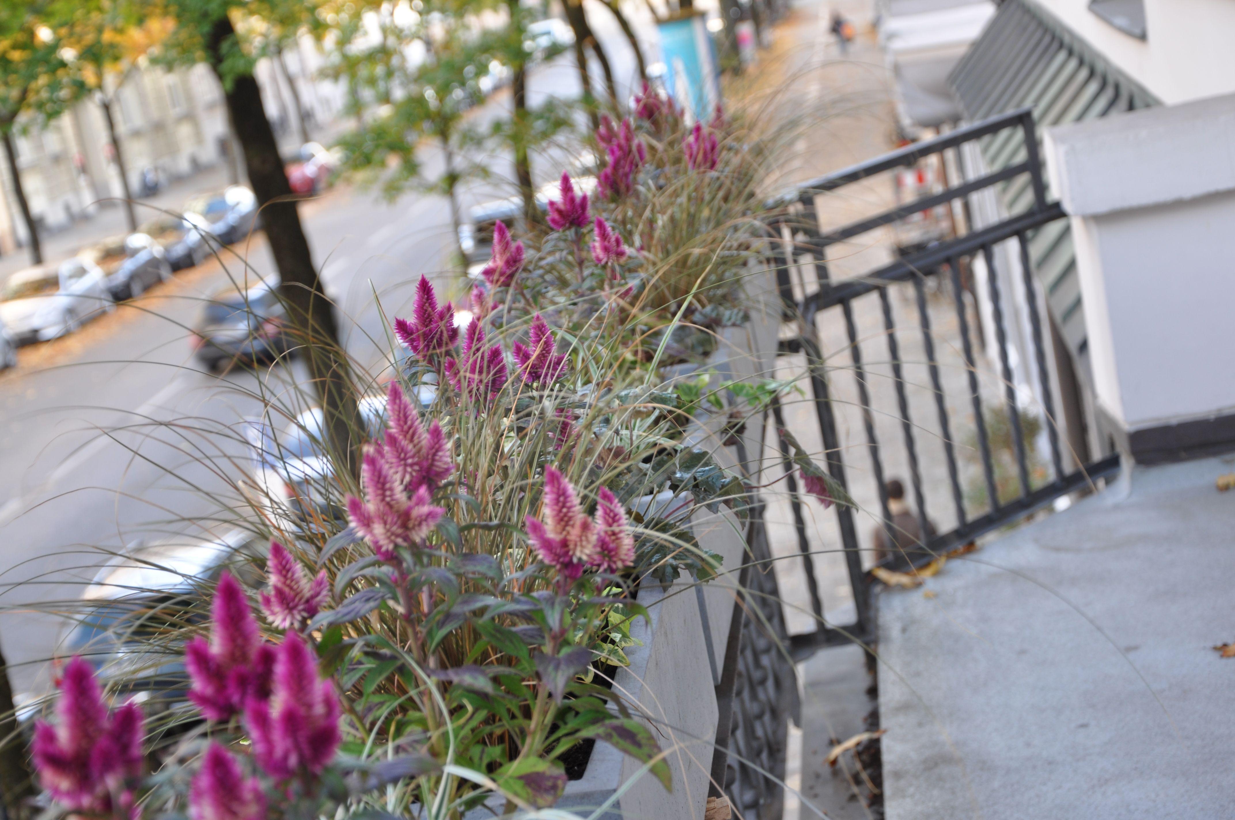 Balkonkasten Herbstbepflanzung Gräser Blumen Aussendeko Pool