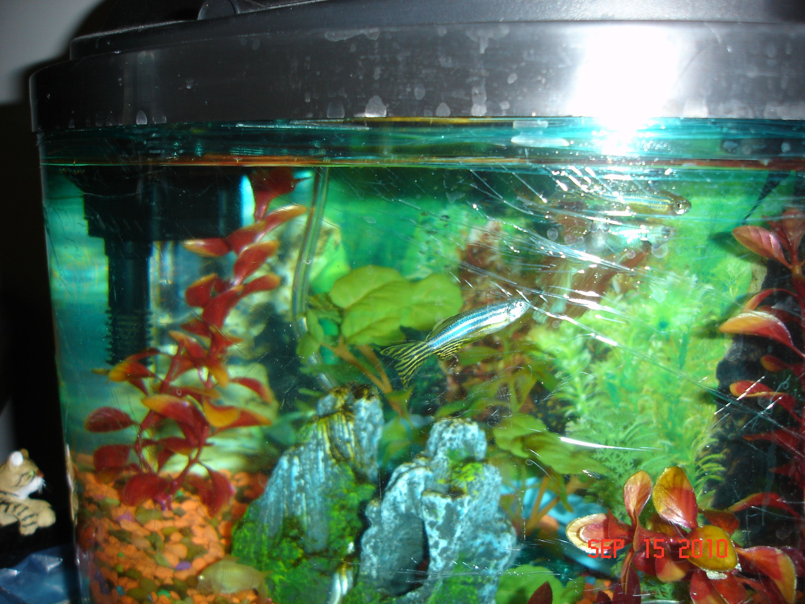 Freshwater fish compatibility - 131 Best Images About Freshwater Aquariums Fish Etc On Pinterest Cichlids Aquascaping And Aquarium Fish