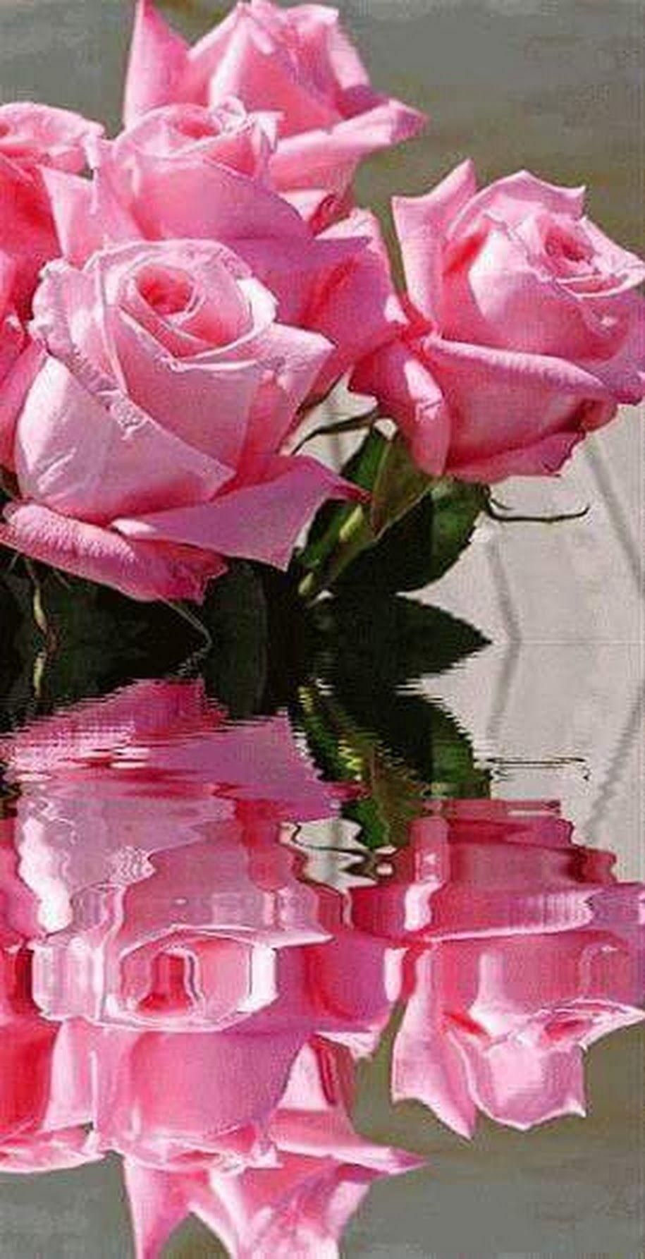 Бронислава Варда | Flores bonitas, Rosas