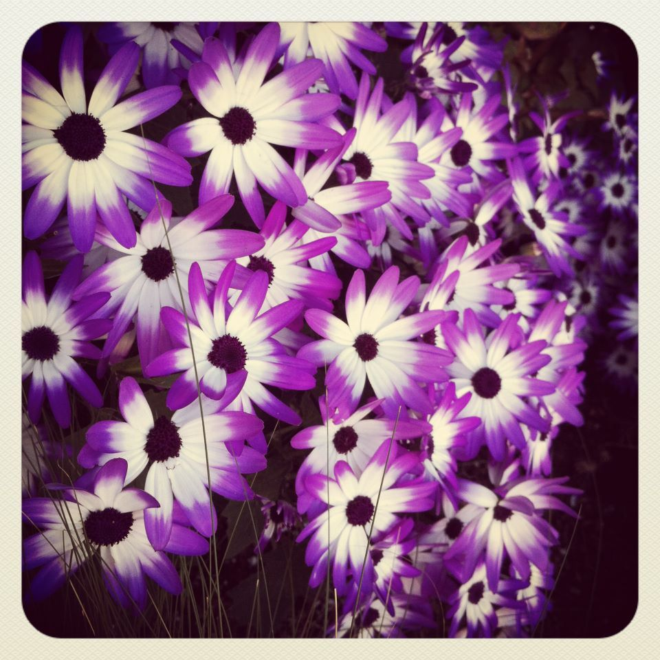 Purple And White Flowers Outdoor Pinterest White Flowers