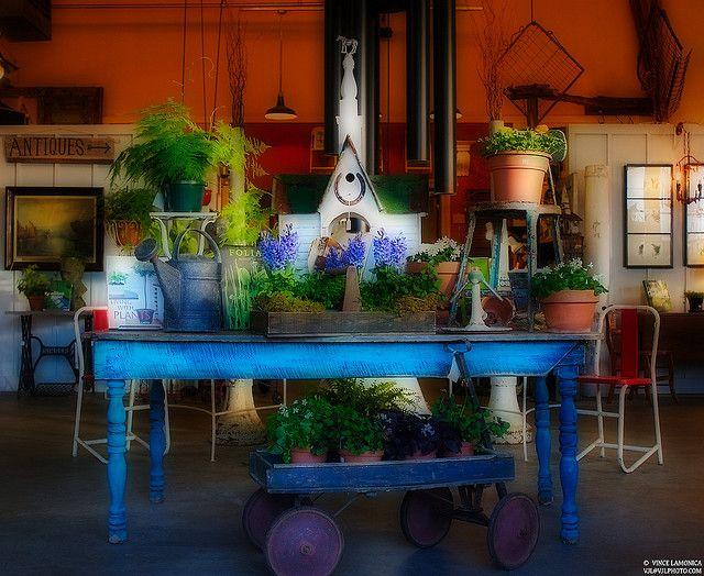 Spring Glow by vjl, via Flickr Plants  Gardens Pinterest