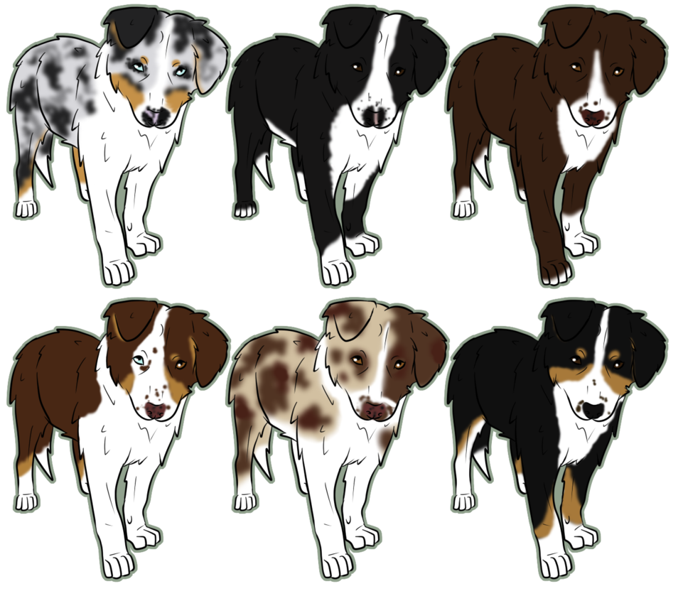 Australian Shepherds Australian Shepherd Cartoon Dog Puppy Cartoon