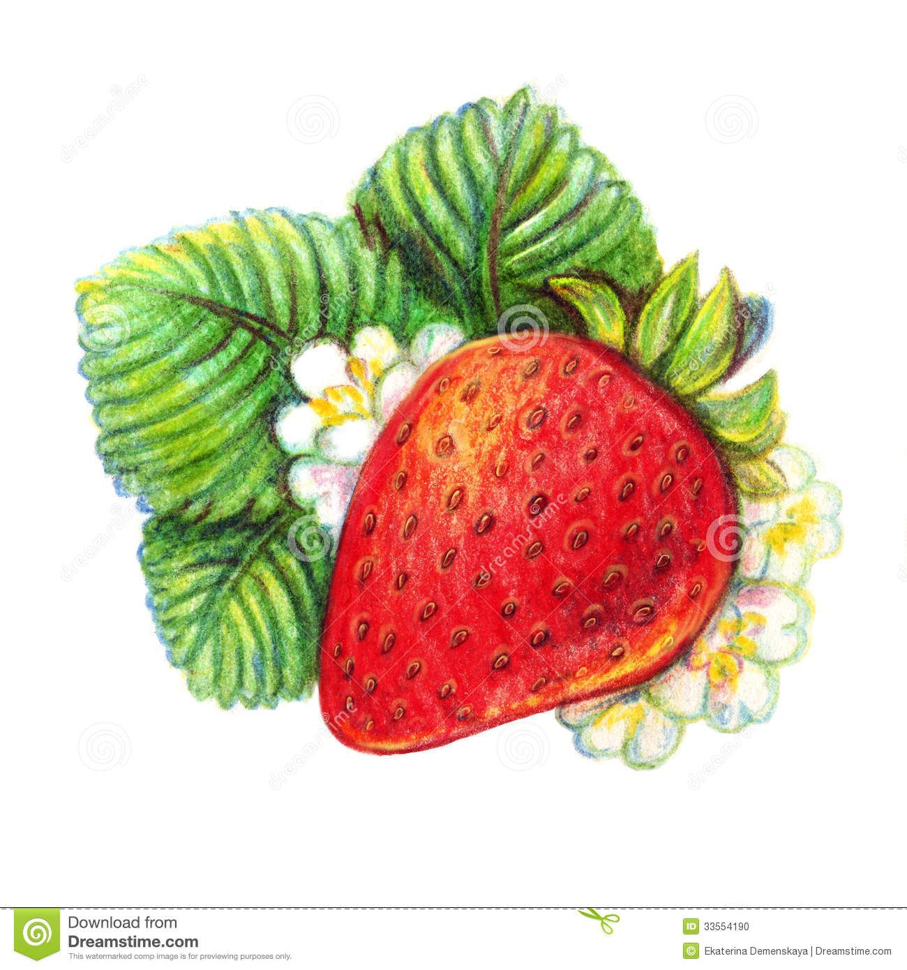 easy color drawings Google Search Fruits drawing