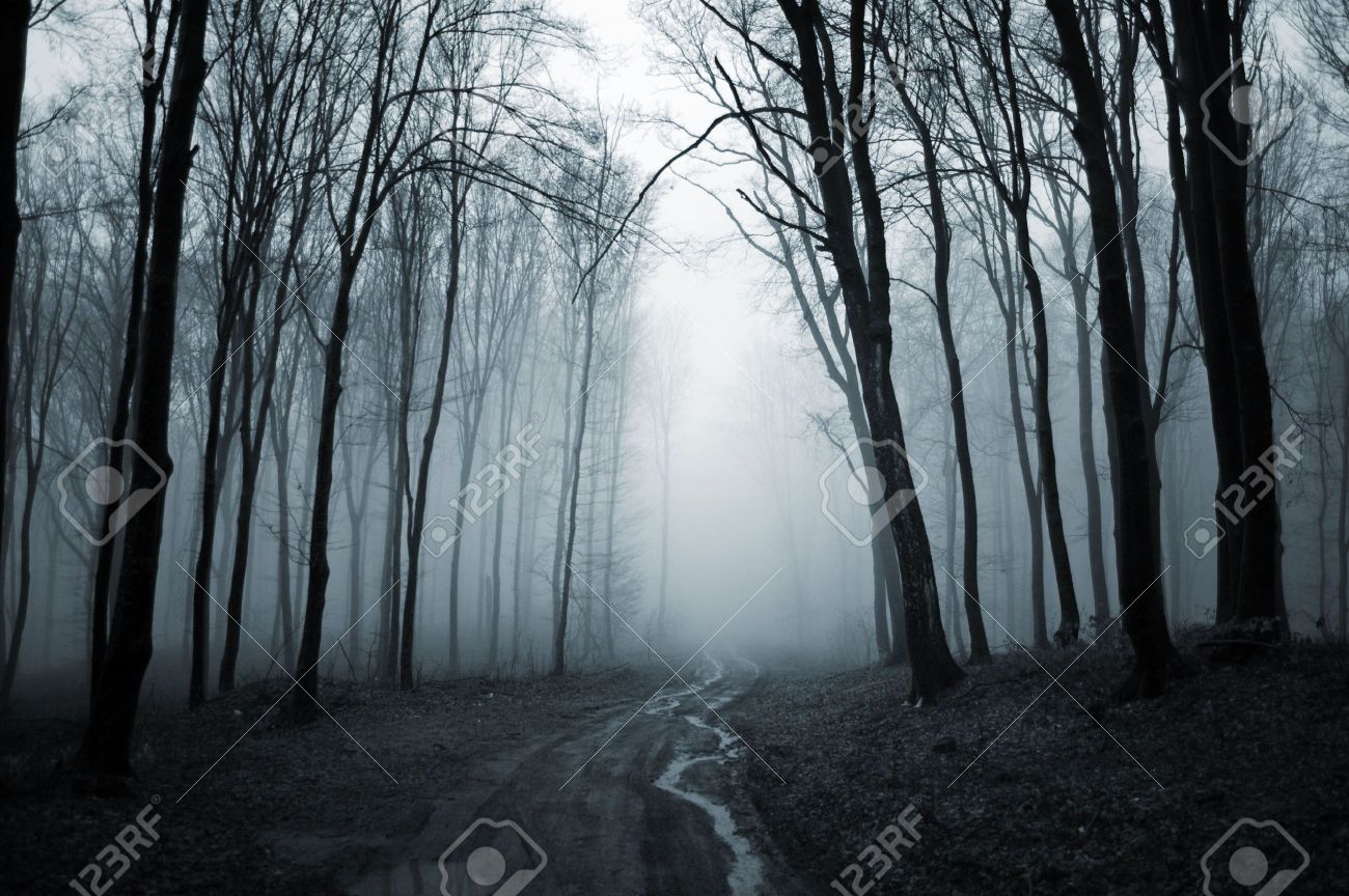 Creepy Forest Wallpaper 1600x1200 Backgrounds 35 Wallpapers
