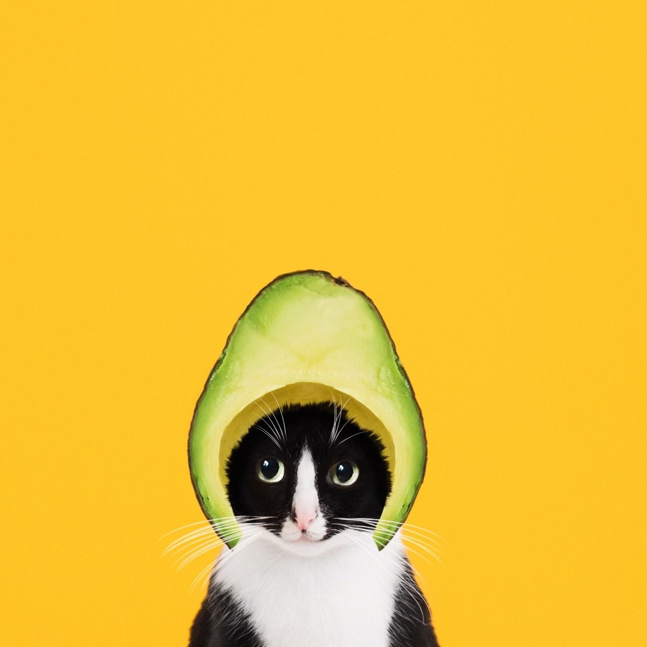 Blessed Be The AVOCATO Fun Pinterest Cat And Animal - Cat dressed in tiny sailors outfit becomes captain of russian cruise ship