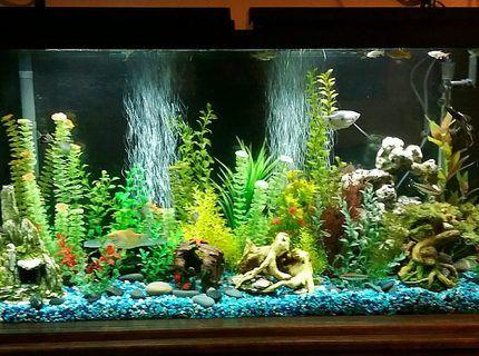 65 Gallon Freshwater Tank With Various Community Fish And Fake Plants Fish Tank Plants Aquarium Decorations Artifical Plants