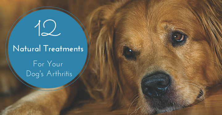 Natural Ways To Treat Arthritis In Dogs