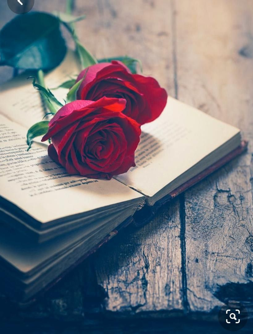 Happy Rose Day Whatsapp Dp For Girls Rose Day Wallpaper Rose Flower Wallpaper Happy Rose Day Wallpaper