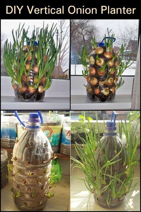 Grow Onions All Year Round Right Inside Your Kitchen With This Onion Vertical Planter Zwiebeln Anbauen Zwiebel Pflanzen Pflanzen