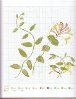 Gallery.ru / Фото #26 - Herbier - Mosca