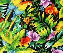 folha tropical - Pesquisa Google