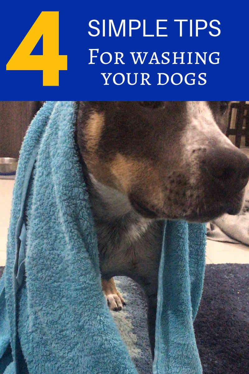Pet Grooming Pay Attention To The Ears And Also Stop Infections