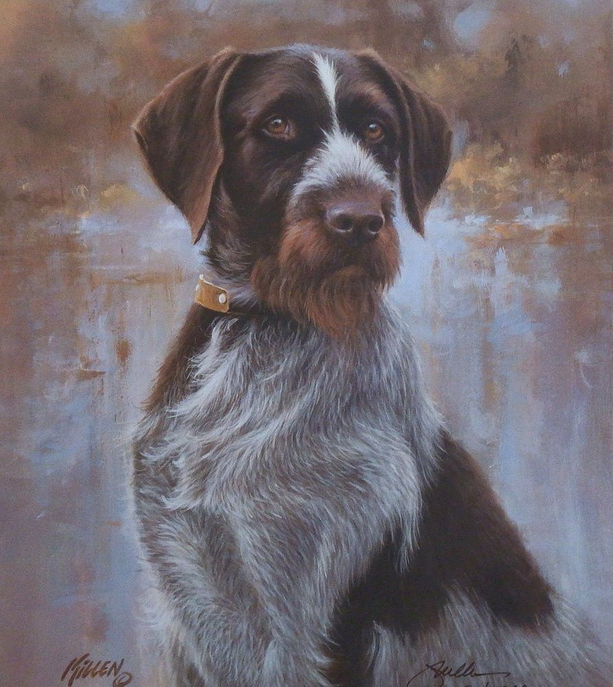 James Killen That\'s my Dog Too Drahthaar | Dog, Pointers and ...