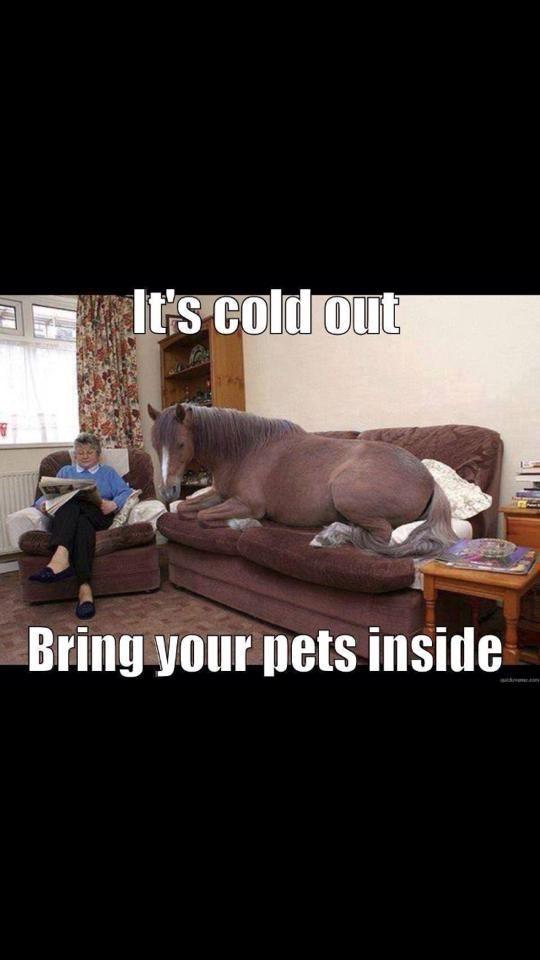 #horseriding #horserider #equine LOL....but really, if you can't bring them into the house, make sure they are warm and covered! #funnyanimalpics