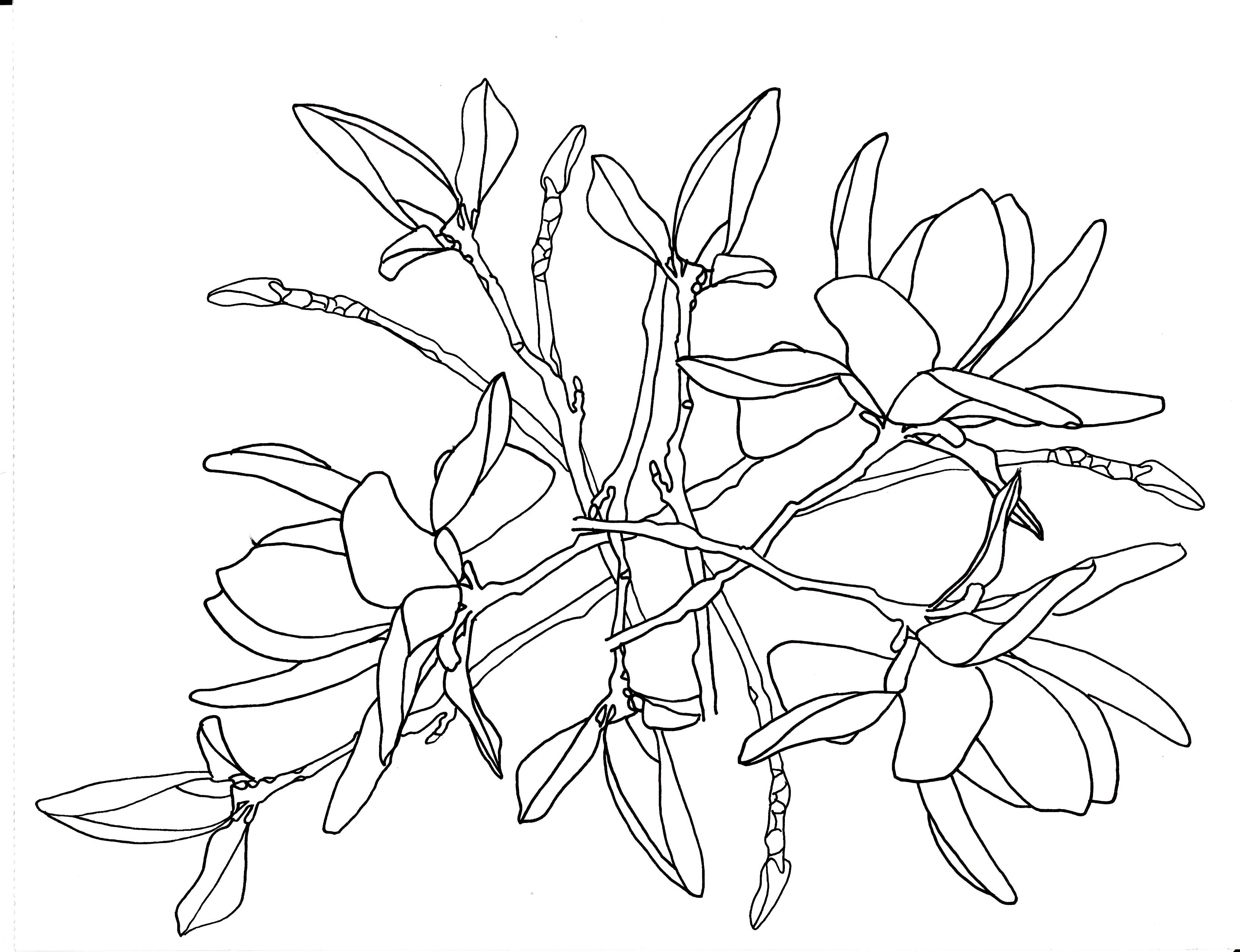 Coloring pictures of flowers and trees - Line Drawing Flowers Tulip Tree Blooms