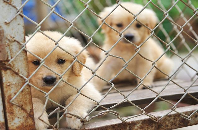 New Nj Law Seeks To Ban Sale Of Puppy Mill Dogs Pets For Sale Shelter Dogs Dogs