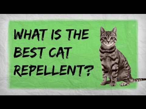 Are you searching for a homemade cat repellent solution