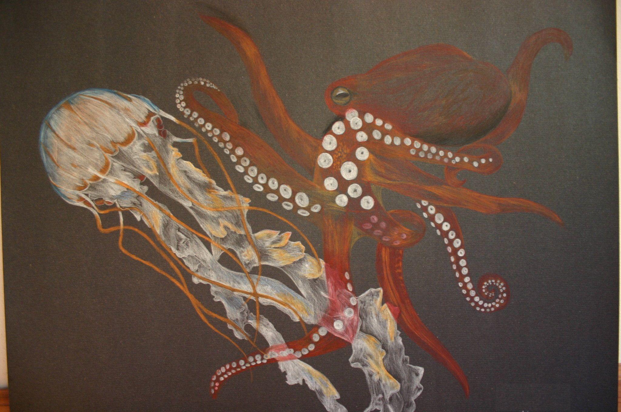 الفرق بين الأخطبوط وقنديل البحر Octopus Jellyfish Jellyfish Art