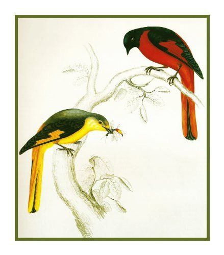 Naturalist Gould Birds Silver Breasted Broadbill Counted Cross Stitch Pattern