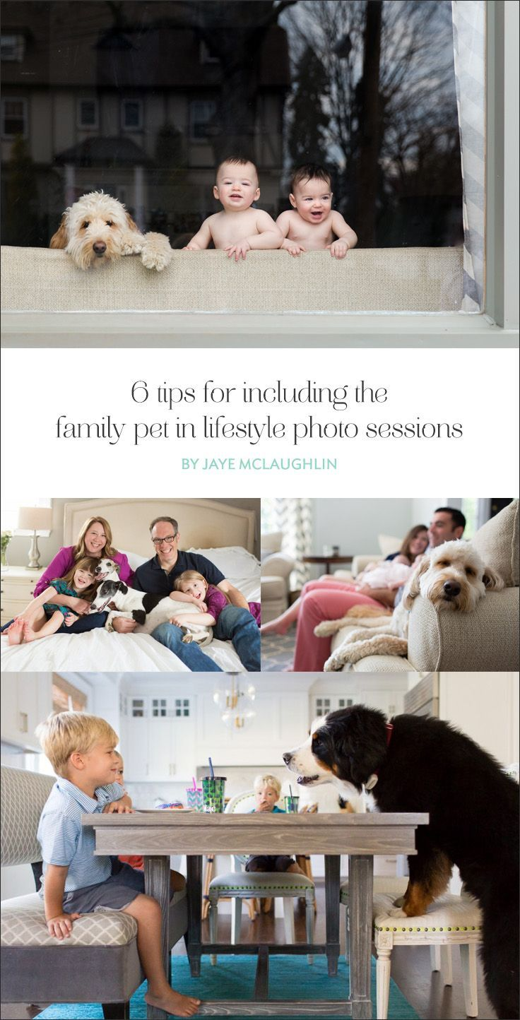 6 tips for including the family pet in lifestyle photo sessions ...