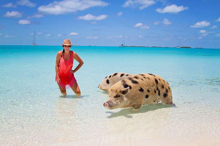 Bahamas Caribbean Exumas Major Spot Staniel Cay Pig Beach