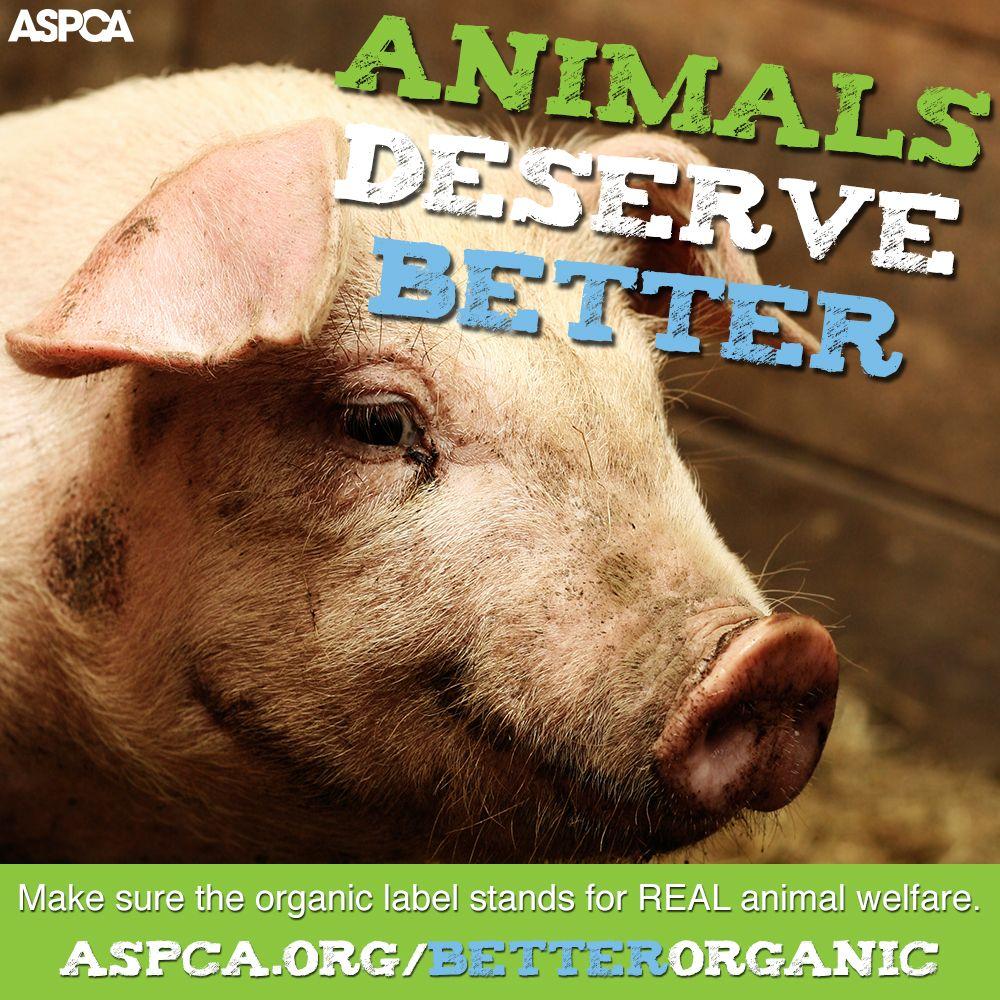 11+ Center for animal health and welfare ideas