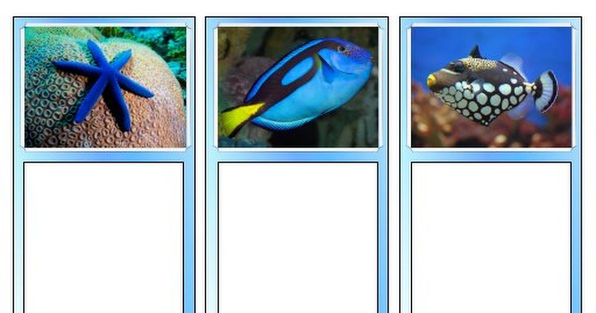 Coral reef matching cards toobpdf matching cards