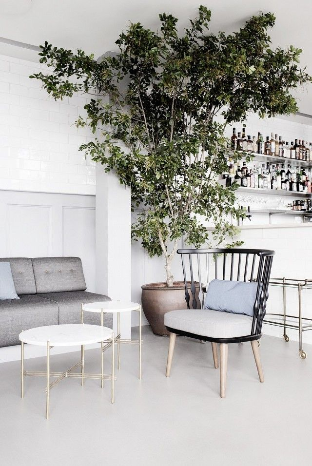 A Bar Lounge Area With An Indoor Tree Provide And Neutral Furnishings Décor