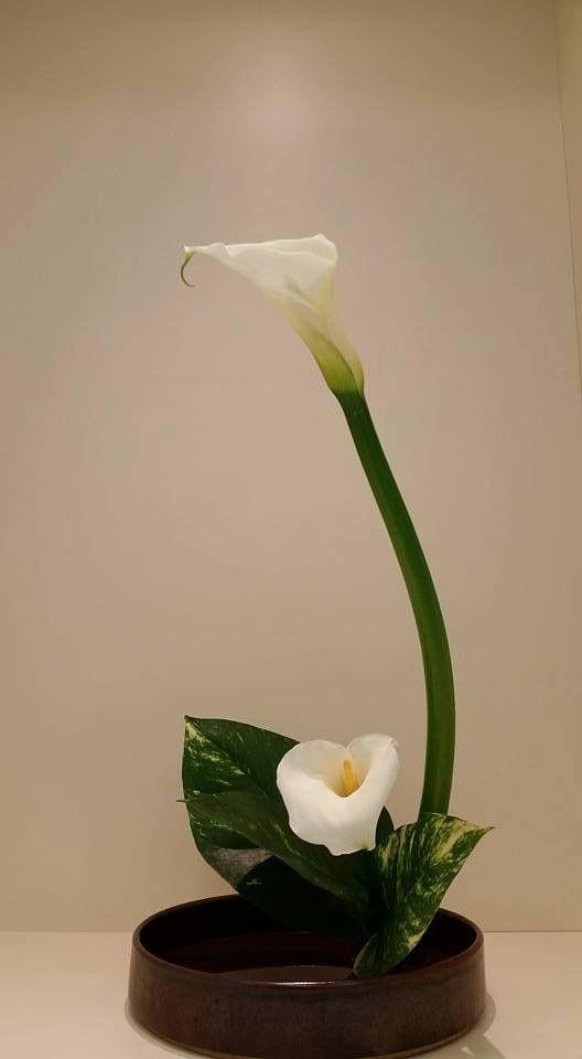 Resultado De Imagen De Arreglos Florales Japoneses Ikebana