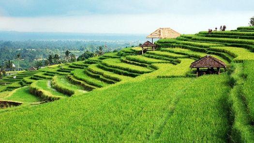 Gambar Pemandangan Sawah Di Jatiluwih Bali Pemandangan Bali Indonesia