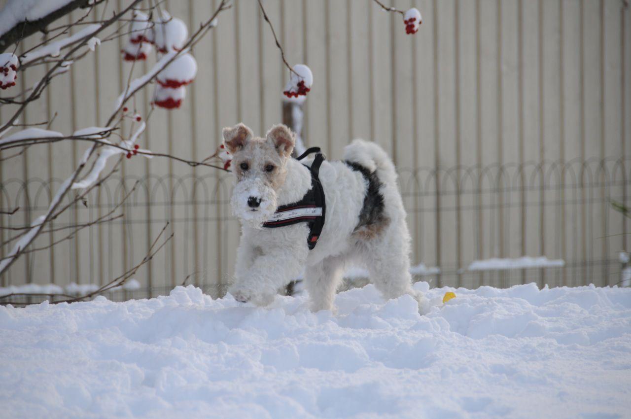 Elli in the snow.