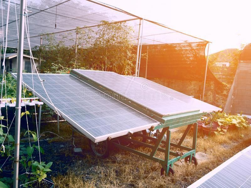Solar Cells For Agriculture Plant And Power Electricity Concept Business And I Ad Agriculture Plant In 2020 Solar Panels Solar Monocrystalline Solar Panels