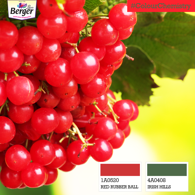 How about a vibrant combination for the dining area that tantalizes hunger? Red is known to help trigger hunger, while green is a mark of natural foods. #ColourChemistry