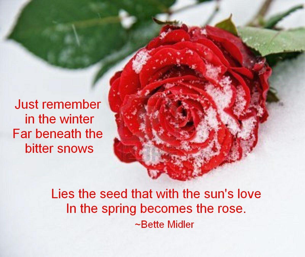 The Rose Bette Midler Quotes Quotesgram Bette Midler Rose Bette
