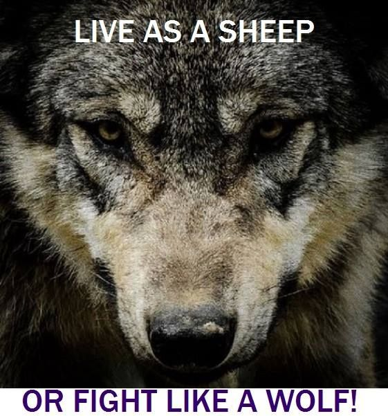 My family and I fight like wolves to help keep all animals safe from harm and extinction