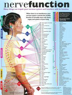 Pin By Deborah Engisch Platt Certified Massage Therapist
