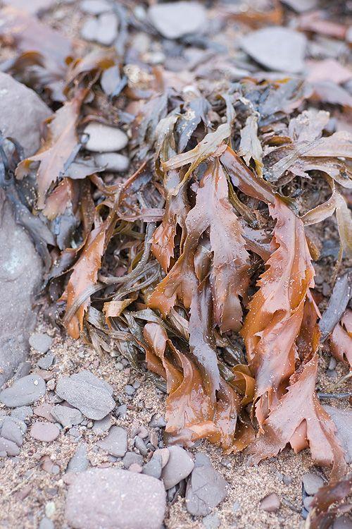 Beautiful bronze and copper kelp via Papier Valise