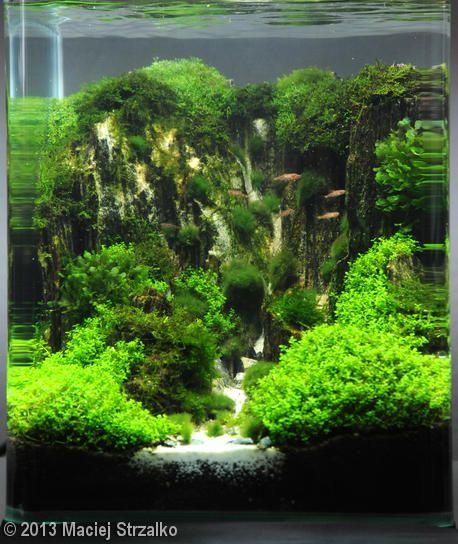 2013 AGA Aquascaping Contest - Entry #600