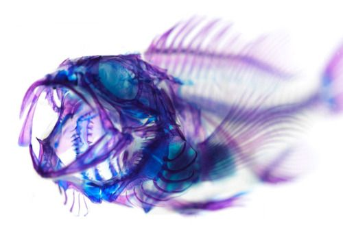 Very cool photo of a fish!  I love how art, particularly photography, can remind us how abstract everything really is.