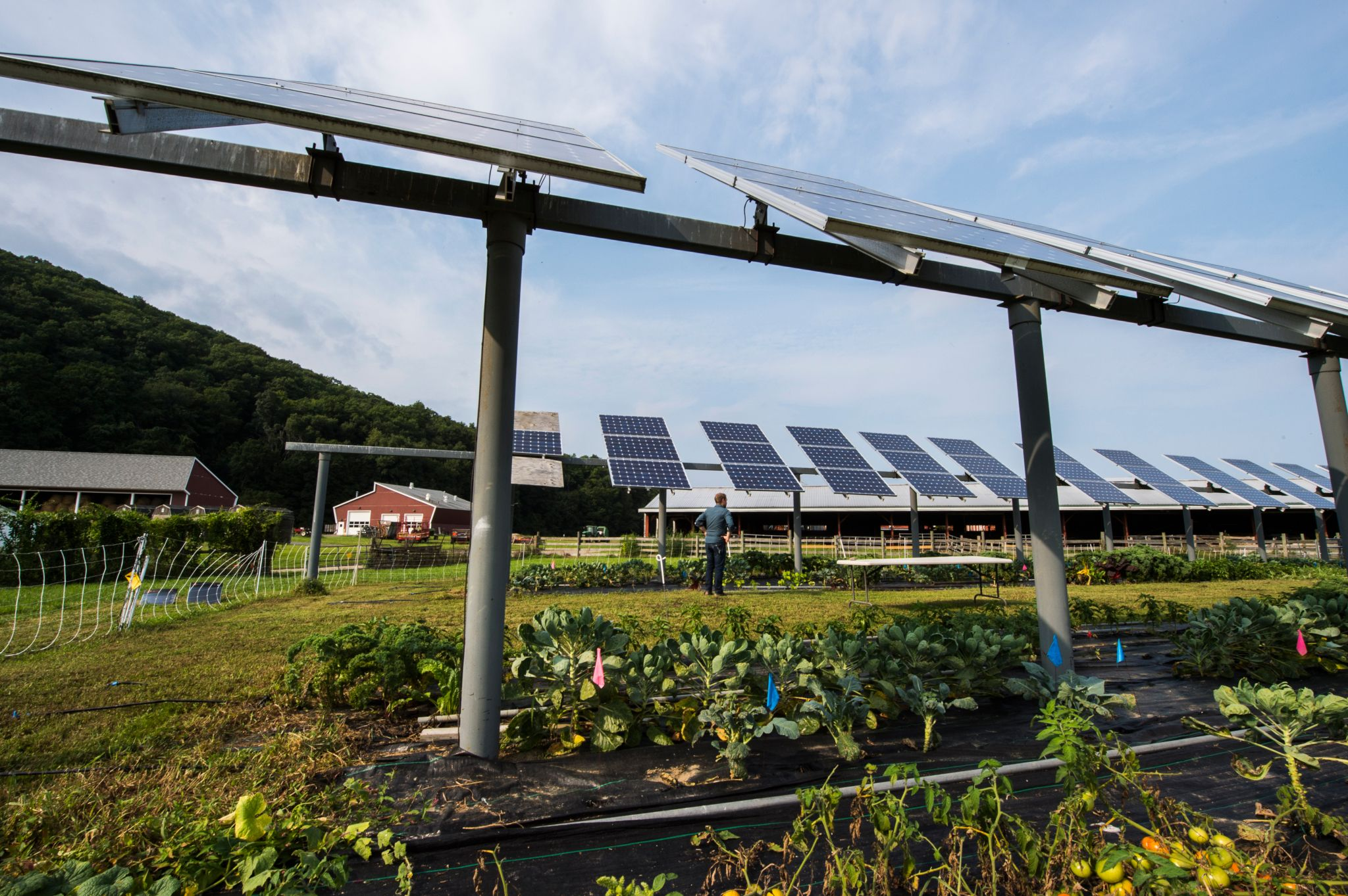 Solar Sharing For Both Food And Clean Energy Production Performance Of Agrivoltaic Systems For Corn A Typical Shade Intolerant Crop Solar Farm Solar Energy
