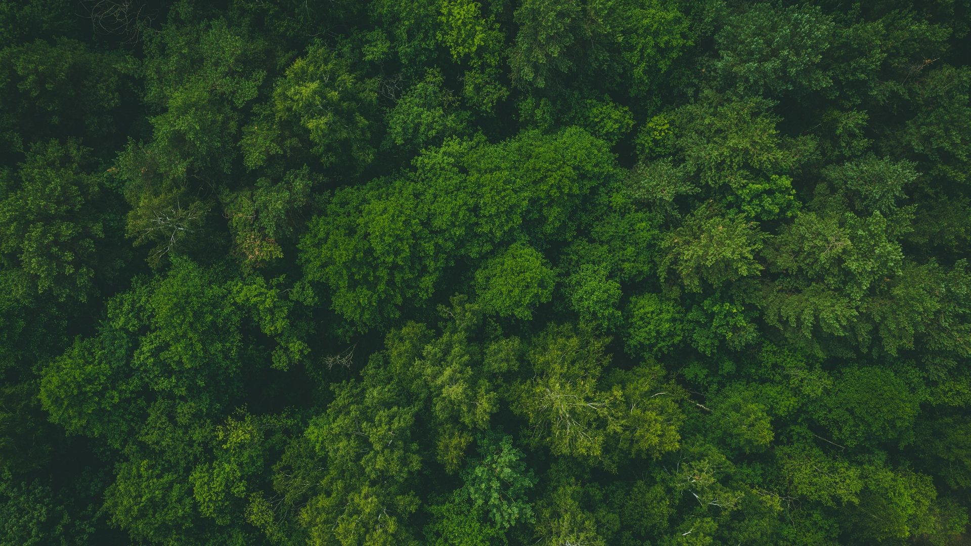 Wallpaper Trees Forest Treetops Aerial View Green Aerial View Tree Forest Aerial Hd wallpaper forest trees aerial view